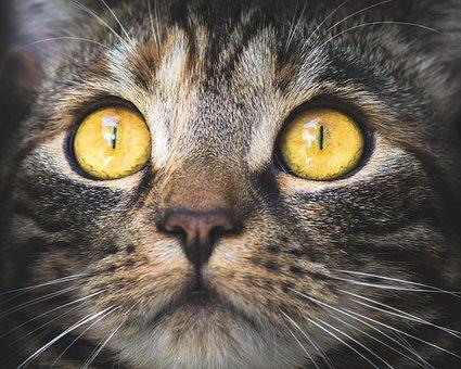 vision gato ojos amarillos