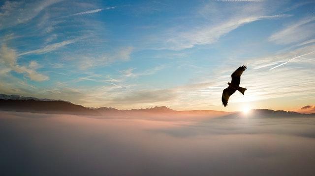 aguila vuelo nubes cielo