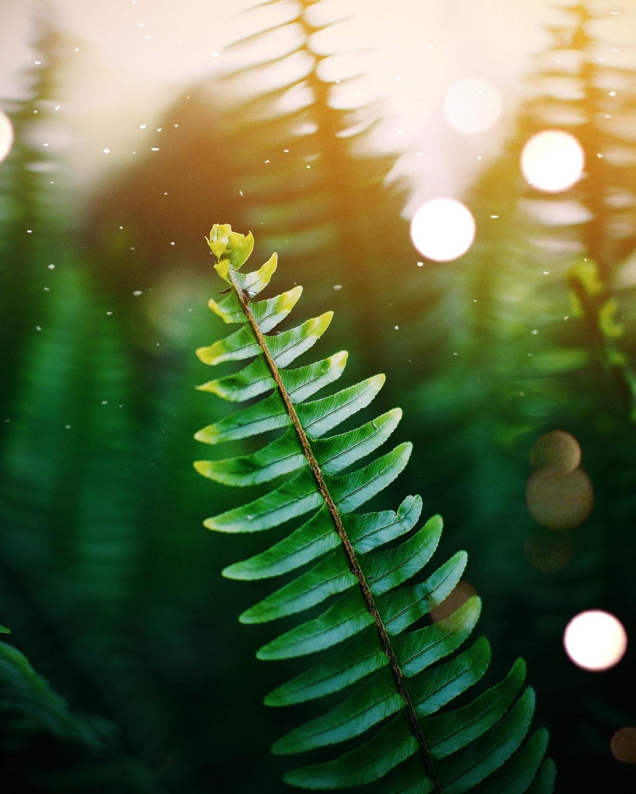 hoja verde brillo